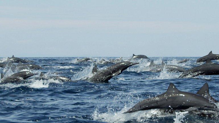 Imagen del documental de la BBC Dolphins-Spy in the Pod