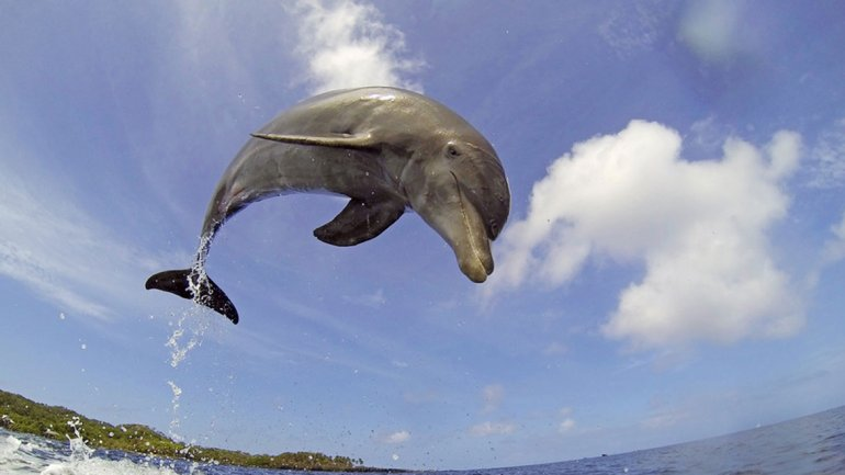 Imagen del documental de la BBC Dolphins-Spy in the Pod