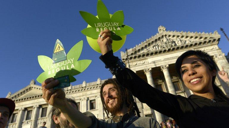El Gobierno uruguayoultima los detallespara dar inicio a laventa de marihuana de uso recreativo en unas 50 farmacias