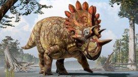 Recreación artística del Regaliceratops peterhewsi /JULIUS T. CSOTONYI / MUSEO ROYAL TYRRELL
