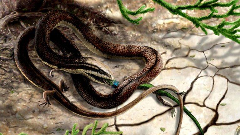 Descubren una serpiente prehistórica con 4 patas