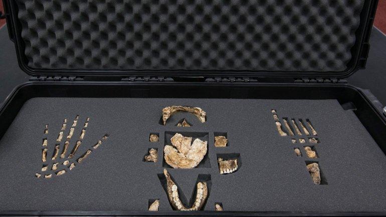 Habló el paleontólogo que descubrió el Homo naledi
