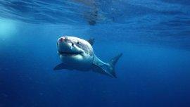 En Australia intentan evitar el ataque de tiburones