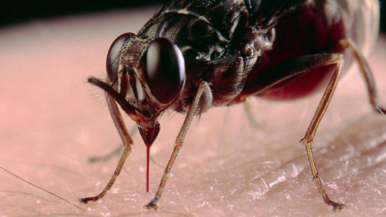 La mosca Tse Tses es una de las más mortíferas