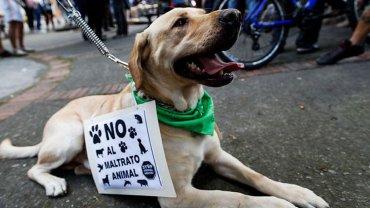 Marcha en contra del maltrato animal