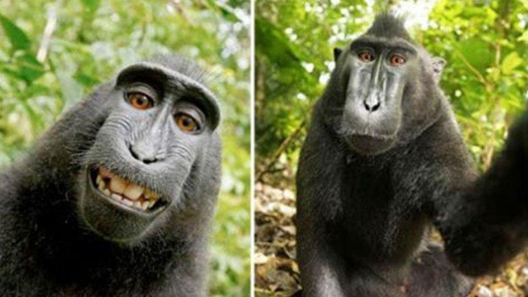 La polémica por la autofoto tomada por el macaco