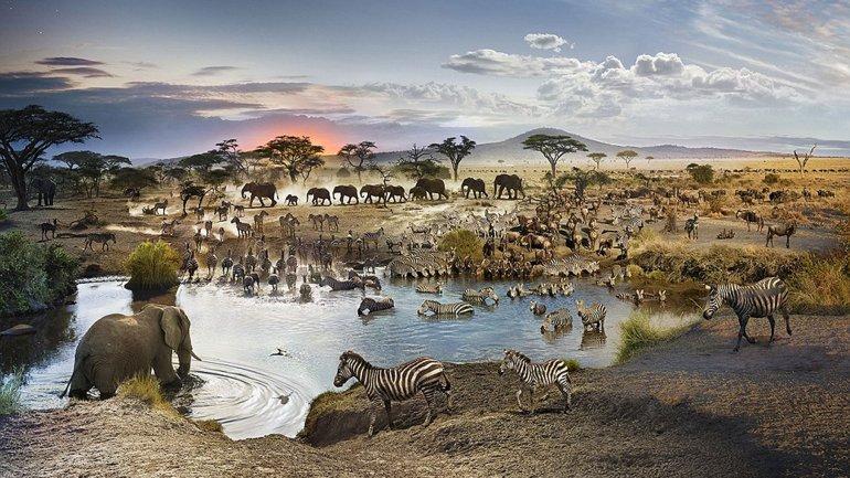 La espectacular fotografía deStephen Wilkes en Tanzania