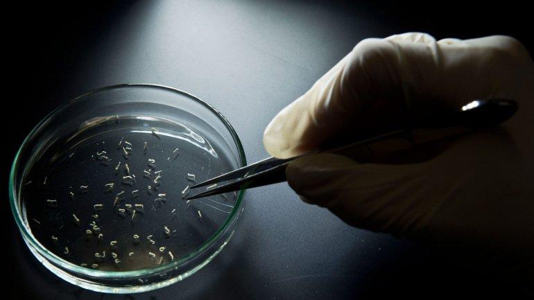 El virus del zika se transmite por el mosquito Aedes aegypti