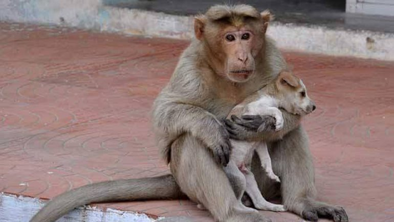 El primate adoptó al pequeño perro callejero como su mascota