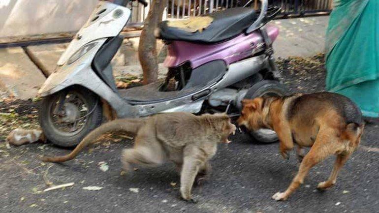 El primate defiende al perro de la posible agresión de otros animales