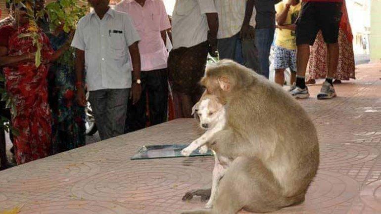 El hecho sucedió en Rode, India