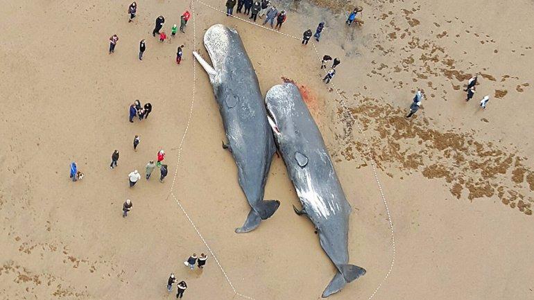 Las ballenas fueron encontradas en las playas de Skegness, en Inglaterra