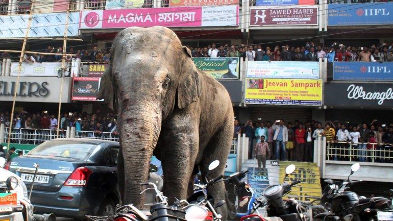 La elefanta destruyó viviendas y vehículos en la localidad de Siliguri
