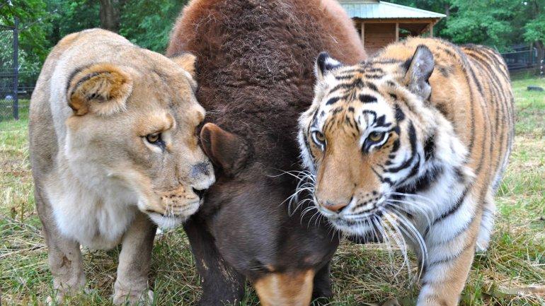 Los tres animales fueron rescatados cuando tenían pocos meses de vida