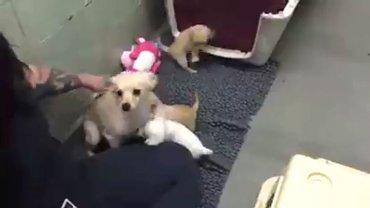 Marin Humane Society de California publicó en su perfil de Facebook un video en el cual muestra el reencuentro de una perra con sus cuatro cachorros.