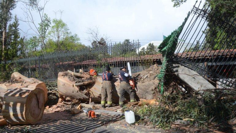 Más de 1.000 árboles fueron derribados por la tormenta