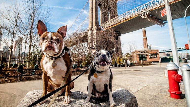 Las nuevas normas permitirán que los perros que tienenlicencia y están vacunados contra la rabiase unan a los seres humanos en los restaurantes