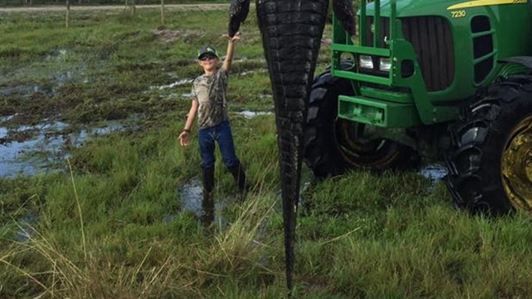 El cocodrilo de 4,5 metros cazado en una granja en el centro de Florida.