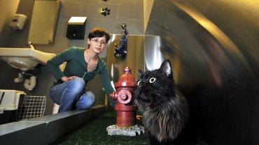 Los felinos tienen a su disposición una porción de pasto artificial para hacer sus necesidades