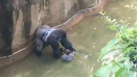 El gorila agarró a un niño de tres que había caído en su foso y los guardias le dispararon